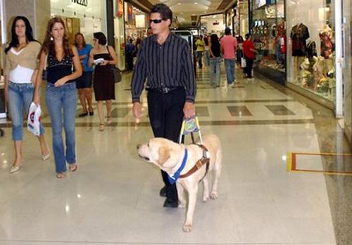 Cão guia para cegos, o que é e como conseguir. 2