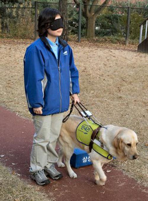 Cão guia para cegos, o que é e como conseguir.