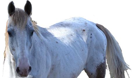 O Cavalo Cego 4