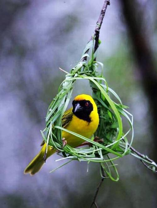 Aves em Ninho 7