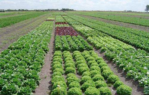 Nossa Extraordinária Agricultura!