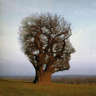 A árvore das assombrações... 57