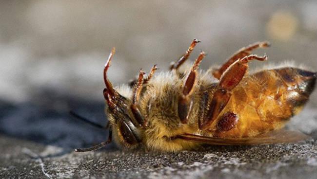 Importantes para o processo de polinização natural, insetos podem desaparecer nos próximos 30 anos