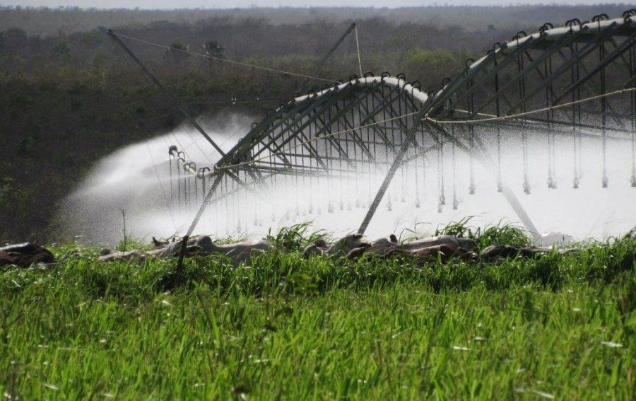 Fazenda aumenta produtividade na pecuária com auxílio da irrigação 1