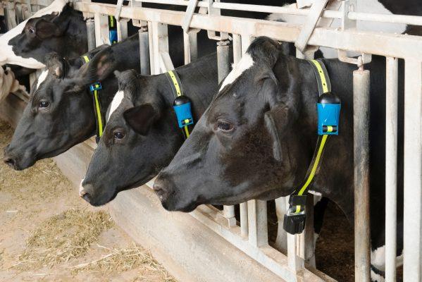 Monitoramento do rebanho auxilia produtores a melhorarem desempenho na atividade leiteira 3